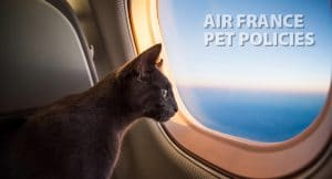 Air France Pet Policy